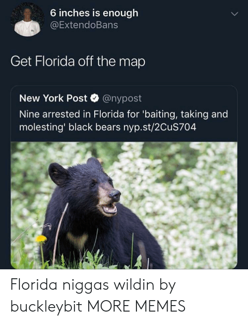 Dank, Memes, and New York: 6 inches is enough  @ExtendoBans  Get Florida off the map  New York Post @nypost  Nine arrested in Florida for 'baiting, taking and  molesting' black bears nyp.st/2CuS704 Florida niggas wildin by buckleybit MORE MEMES
