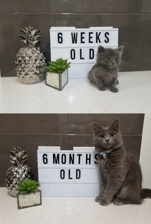 Memes, Old, and 🤖: 6 WEEKS  6 MONTHS  OLD