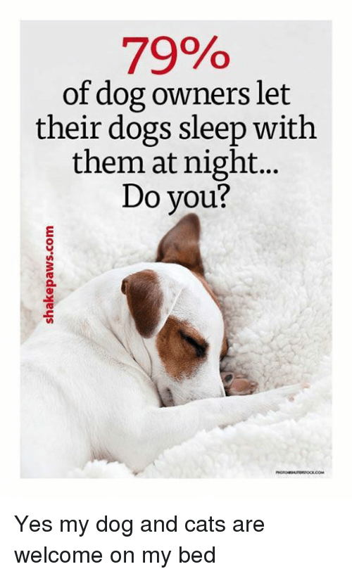 dog-and-cats: 79%  of dog owners let  their dogs sleep with  them at night...  Do you? Yes my dog and cats are welcome on my bed