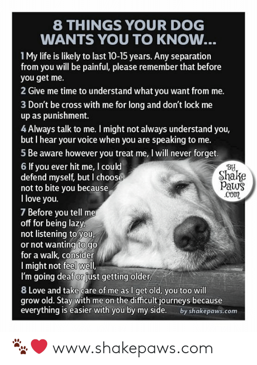 take care of me: 8 THINGS YOUR DOG  WANTS YOU TO KNOW...  1My life is likely to last 10-15 years. Any separation  from you will be painful, please remember that before  you get me.  2 Give me time to understand what you want from me.  3 Don't be cross with me for long and don't lock me  up as punishment.  4 Always talk to me. I might not always understand you,  but I hear your voice when you are speaking to me.  5 Be aware however you treat me, I will never forget.  By  Shake  Paws  .com  6 If you ever hit me, I could  defend myself, but I choose  not to bite you because  I love you.  7 Before you tell me  off for being lazy,  not listening to you,  or not wanting to go  for a walk, consider  Imight not feel well,  I'm going deaf or just getting older  8 Love and take care of me as I get old, you too will  grow old. Stay with me on the difficult journeys because  everything is easier with you by my side.  by shakepaws.com 🐾❤️ www.shakepaws.com