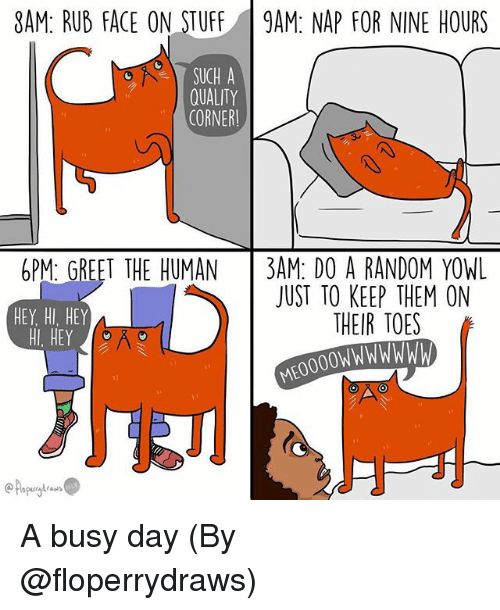 Busy Day: 8AM: RUB FACE ON STUFF9AM: NAP FOR NINE HOURS  SUCH A  QUALITY  CORNER  PM GREET THE HUMAN3AM DO A RANDOM YOWL  HEY, HI, HEY  HI, HEY  JUST TO KEEP THEM ON  THEIR TOES A busy day (By @floperrydraws)