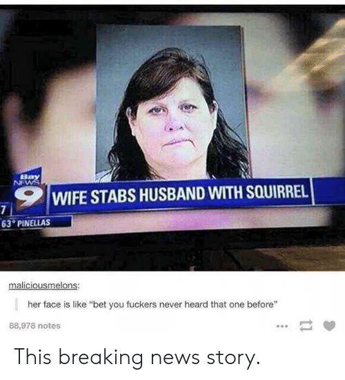 """News, Breaking News, and Squirrel: ,9 1 WIFE STABS HUSBAND WITH SQUIRREL  63 PINELLAS  maliciousmelons:  her face is like """"bet you fuckers never heard that one before""""  88,978 notes This breaking news story."""