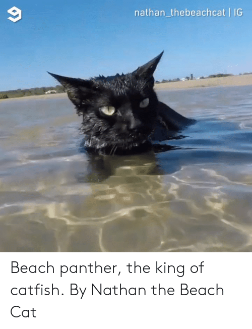 Catfished, Dank, and Beach: 9  nathan_thebeachcat IG Beach panther, the king of catfish.  By Nathan the Beach Cat