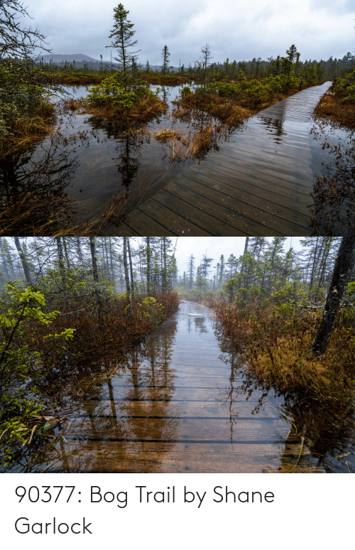 Tumblr, Blog, and Flickr: 90377:   Bog Trail by Shane Garlock