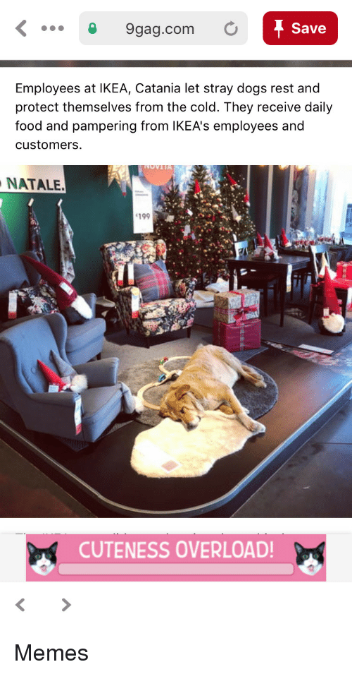natale: 9gag.com O  Save  Employees at IKEA, Catania let stray dogs rest and  protect themselves from the cold. They receive daily  food and pampering from lKEA's employees and  customers  NATALE.  199  CUTENESS OVERLOAD Memes