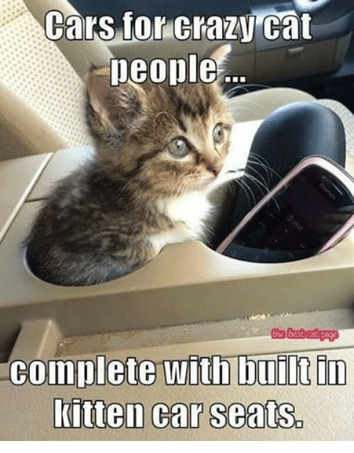 Crazy Cat People: Cars for Crazy Cat  people  the best cat Dage  complete with built in  kitten car seats.