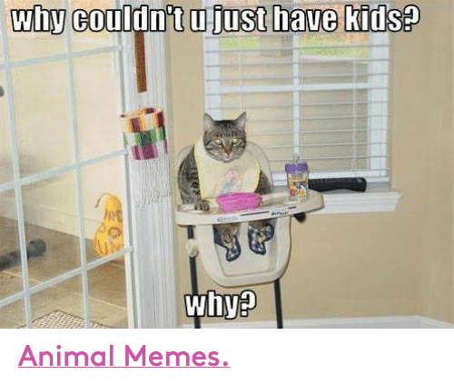 Animals, Anime, and Meme: why  couldnt ujust have kids  whya Animal Memes.