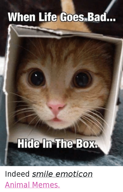 Animals, Anime, and Bad: When Life Goes Bad...  Hide In The Box. Indeed smile emoticon Animal Memes.