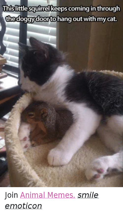 Animals, Anime, and Meme: This little squirrel keeps coming in through  thedoggydoortohang out with mycat. Join Animal Memes. smile emoticon
