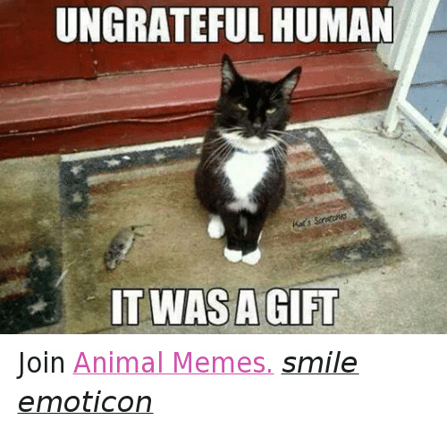 Animals, Anime, and Meme: UNGRATEFUL HUMAN  Kats S  IT WAS A GIFT Join Animal Memes. smile emoticon