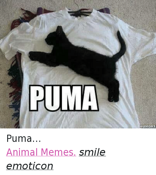 Animals, Anime, and Meme: PUMA  HUMORT Puma…  Animal Memes. smile emoticon