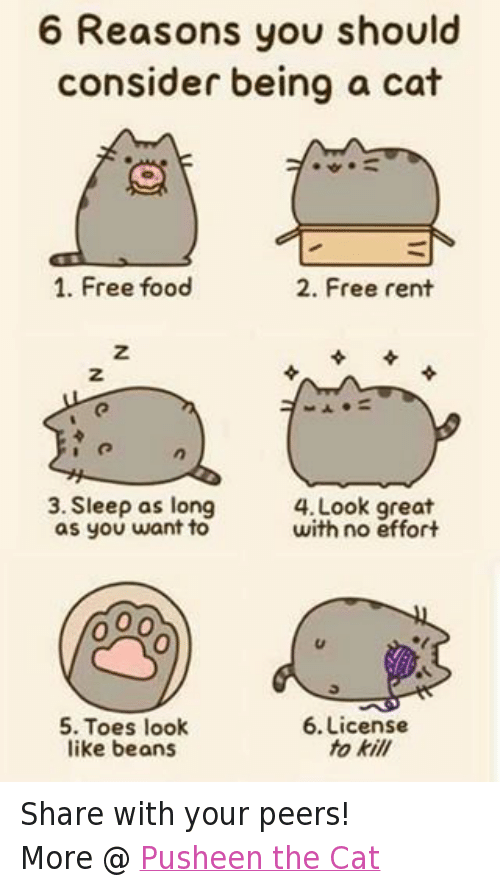 Pusheens: 6 Reasons you should  consider being a cat  1. Free food  2. Free rent  3. Sleep as long  OO  with no effort  as you want to  6. License  5. Toes look  to kill  like beans Share with your peers!  More @ Pusheen the Cat