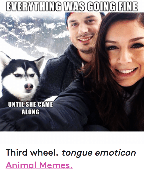 Animals, Anime, and Meme: EVERYTHING WAS GOING FINE  UNTIL SHE CAME  ALONG Third wheel. tongue emoticon  Animal Memes.