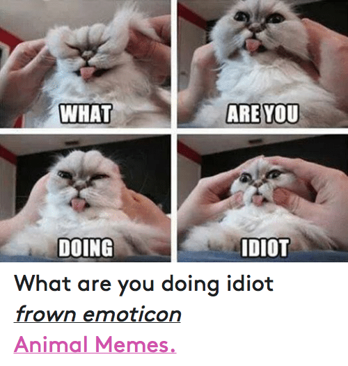 Animals, Anime, and Meme: WHAT  DOING  ARE YOU  IDIOT What are you doing idiot frown emoticon  Animal Memes.