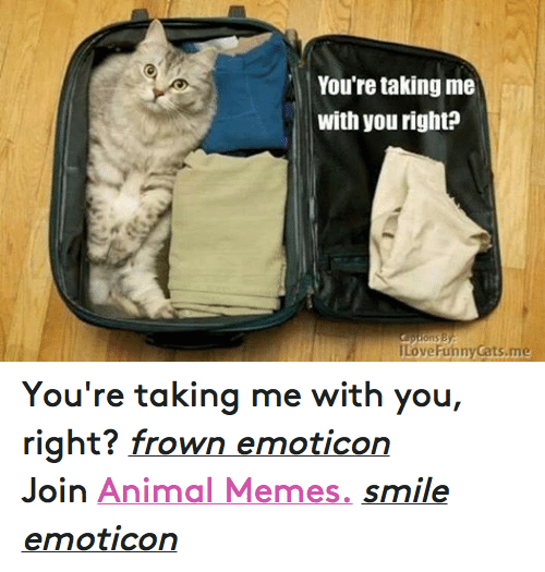 Animals, Anime, and Cats: You're taking me  with you right?  ILoveFunny Cats me You're taking me with you, right? frown emoticon  Join Animal Memes. smile emoticon