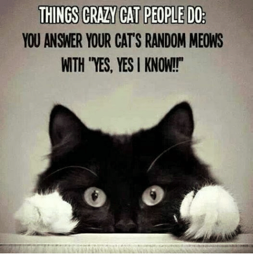 "Crazy Cat People: THINGS CRAZY CAT PEOPLE DO  YOU ANSWER YOUR CATS RANDOM MEONS  WTH ""YES, YES KNOW!!"""