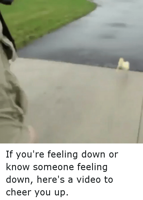 25 Best Memes About Videos To Cheer You Up Videos To Cheer