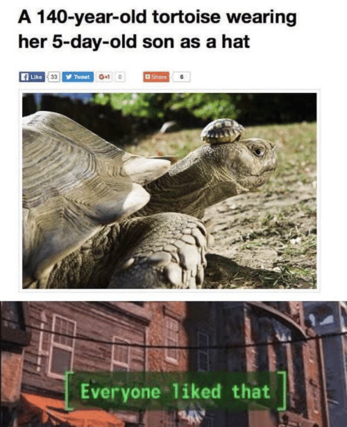hat: A 140-year-old tortoise wearing  her 5-day-old son as a hat  Like 33 Tweet G+10  Share 6  Everyone liked that