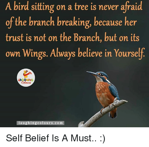 self belief: A bird sitting on a tree is never afraid  of the branch breaking, because her  trust is not on the Branch, but on its  own Wings. Always believe in Yourse  laughing colours.com Self Belief Is A Must.. :)