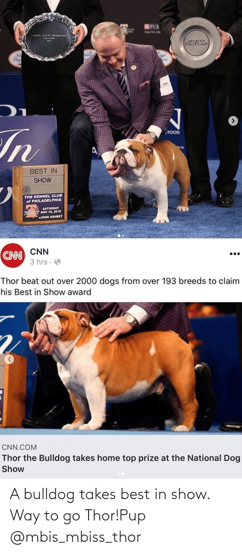 Takes: A bulldog takes best in show. Way to go Thor!Pup @mbis_mbiss_thor