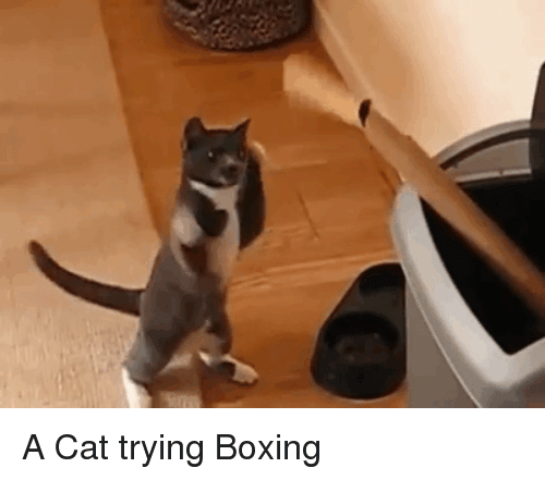 Boxing, Cat, and  a Cat