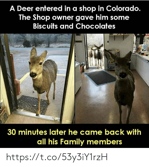 Deer: A Deer entered in a shop in Colorado.  The Shop owner gave him some  Biscuits and Chocolates  30 minutes later he came back with  all his Family members https://t.co/53y3iY1rzH