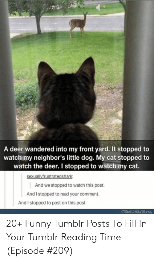 Watch This: A deer wandered into my front yard. It stopped to  watch my neighbor's little dog. My cat stopped to  watch the deer. I stopped to watch my cat.  sexuallyfrustratedshark  And we stopped to watch this post.  And I stopped to read your comment.  And I stopped to post on this post  STRANGEBEAVER.com 20+ Funny Tumblr Posts To Fill In Your Tumblr Reading Time (Episode #209)