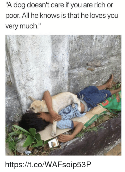 """Memes, 🤖, and Dog: A dog doesn't care it you are rich or  poor. All he knows is that he loves you  very much."""" https://t.co/WAFsoip53P"""