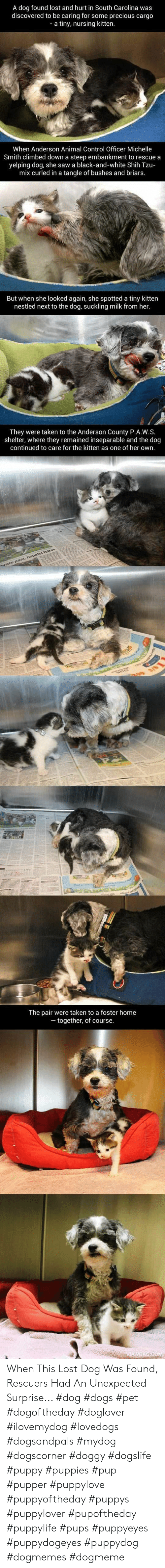 9gag, Dogs, and Future: A dog found lost and hurt in South Carolina was  discovered to be caring for some precious cargo  a tiny, nursing kitten.  When Anderson Animal Control Officer Michelle  Smith climbed down a steep embankment to rescue a  yelping dog, she saw a black-and-white Shih Tzu-  mix curled in a tangle of bushes and briars.  But when she looked again, she spotted a tiny kitten  nestled next to the dog, suckling milk from her  They were taken to the Anderson County P.A.W.S.  shelter, where they remained inseparable and the dog  continued to care for the kitten as one of her own.  arate past, hopeful future  3/S  The pair were taken to a foster home  together, of course.  -  9GAG.COM When This Lost Dog Was Found, Rescuers Had An Unexpected Surprise...  #dog #dogs #pet #dogoftheday #doglover #ilovemydog #lovedogs #dogsandpals #mydog #dogscorner #doggy #dogslife #puppy #puppies #pup #pupper #puppylove #puppyoftheday #puppys #puppylover #pupoftheday #puppylife #pups #puppyeyes #puppydogeyes #puppydog #dogmemes #dogmeme