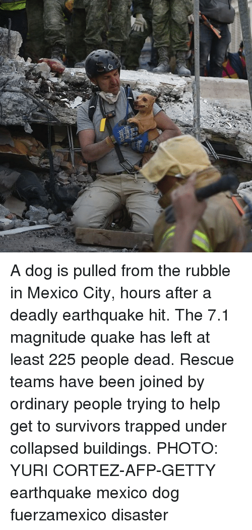rubble: A dog is pulled from the rubble in Mexico City, hours after a deadly earthquake hit. The 7.1 magnitude quake has left at least 225 people dead. Rescue teams have been joined by ordinary people trying to help get to survivors trapped under collapsed buildings. PHOTO: YURI CORTEZ-AFP-GETTY earthquake mexico dog fuerzamexico disaster