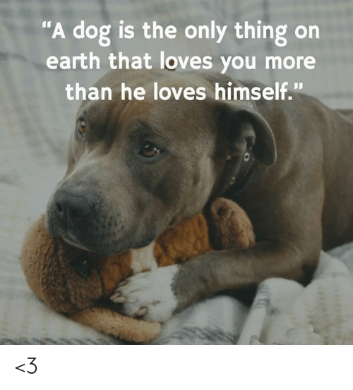 """Memes, Earth, and 🤖: """"A dog is the only thing on  earth that loves you more  than he loves himself."""" <3"""