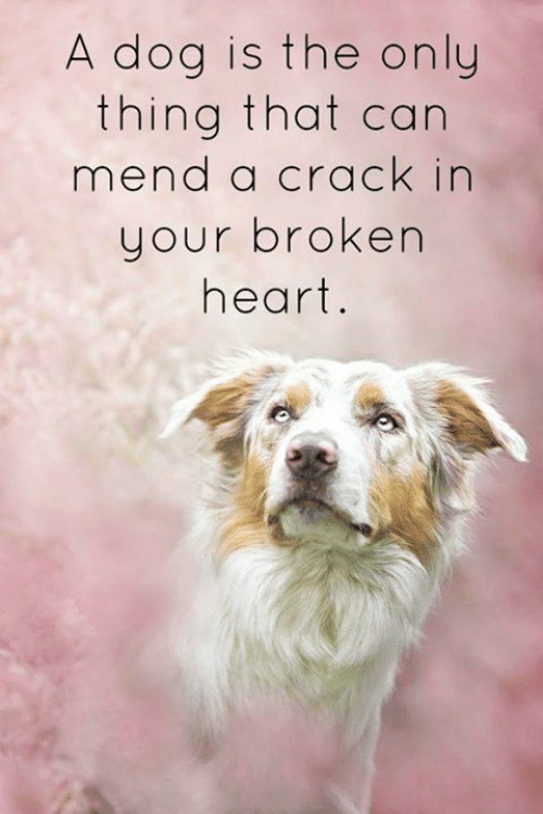 broken heart: A dog is the only  thing that can  mend a crack in  your broken  heart.