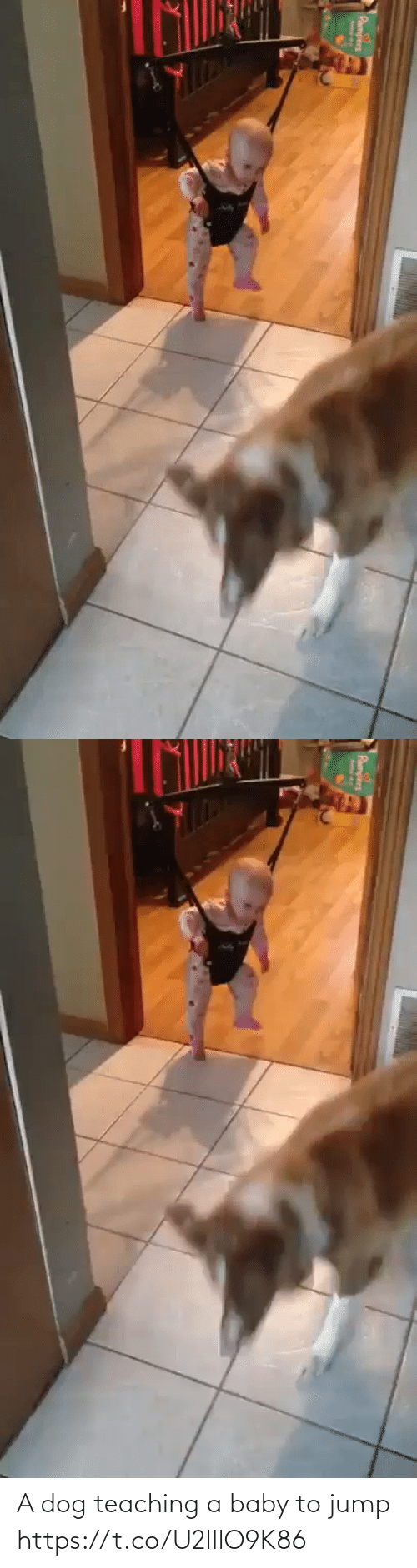 Funny: A dog teaching a baby to jump https://t.co/U2lIlO9K86