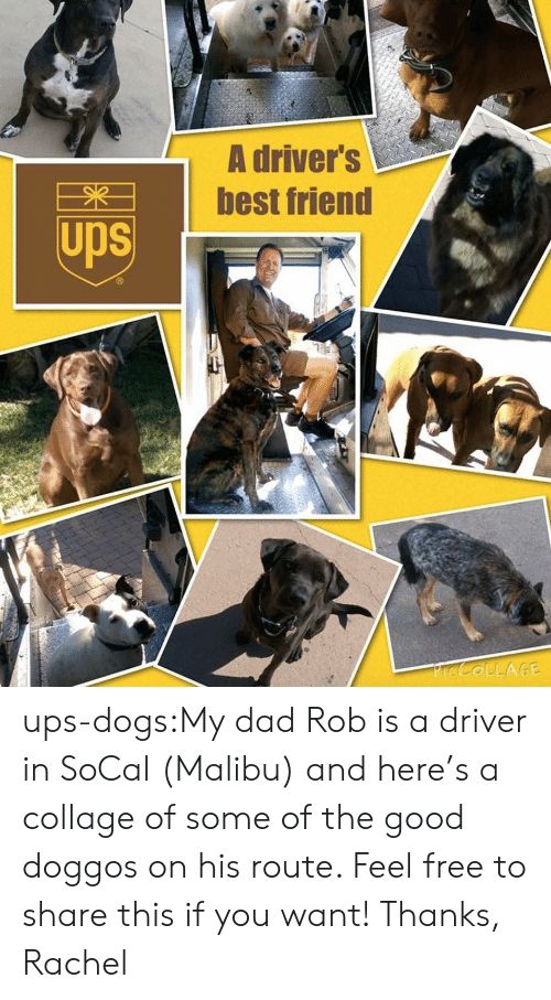 malibu: A driver's  best friend  Ups ups-dogs:My dad Rob is a driver in SoCal (Malibu) and here's a collage of some of the good doggos on his route. Feel free to share this if you want! Thanks, Rachel