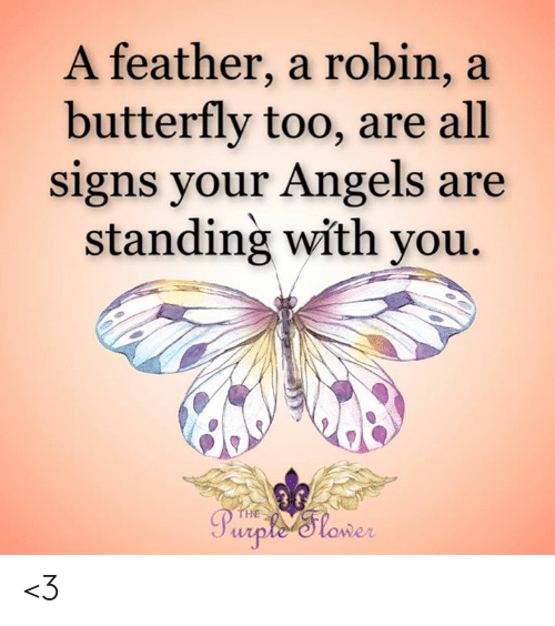 Memes, Angels, and Butterfly: A feather, a robin, a  butterfly too, are all  signs your Angels are  standing with you.  THE  Purple'Tlower <3