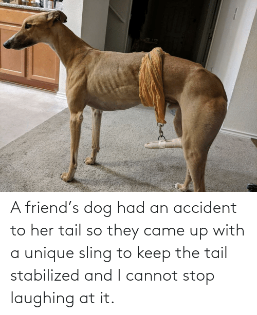 Laughing At: A friend's dog had an accident to her tail so they came up with a unique sling to keep the tail stabilized and I cannot stop laughing at it.