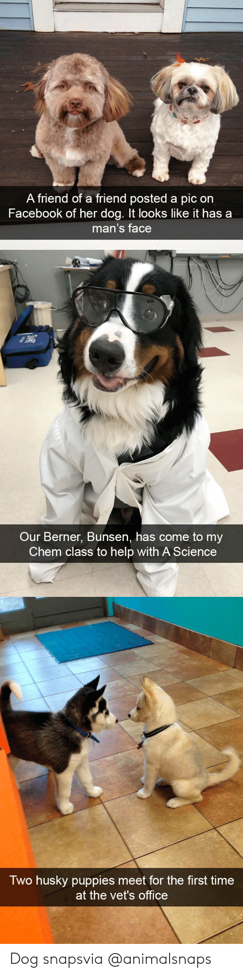 Facebook, Puppies, and Target: A friend of a friend posted a pic on  Facebook of her dog. It looks like it has a  man's face   Our Berner, Bunsen, has come to my  Chem class to help with A Science   Two husky puppies meet for the first time  at the vet's office Dog snapsvia @animalsnaps