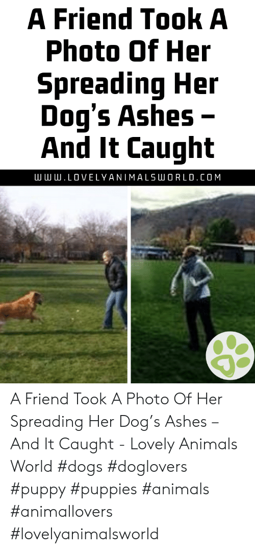 Animals, Dogs, and Puppies: A Friend Took A  Photo Of Her  Spreading Her  Dog's Ashes -  And It Caught  .LOVELYANIMALSLU O R L D . COM A Friend Took A Photo Of Her Spreading Her Dog's Ashes – And It Caught - Lovely Animals World #dogs #doglovers #puppy #puppies #animals #animallovers #lovelyanimalsworld
