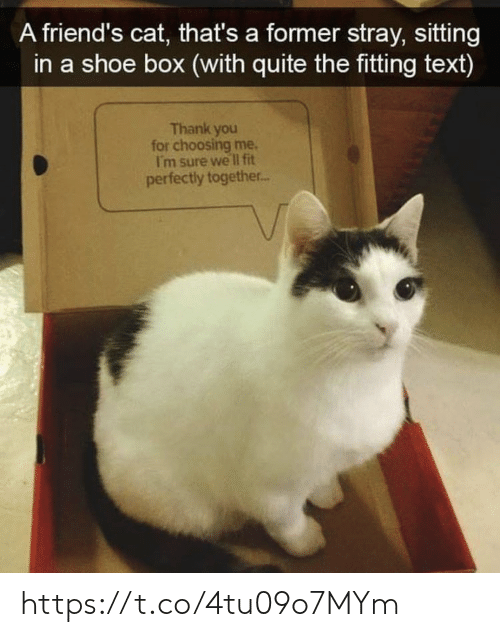 Friends, Memes, and Thank You: A friend's cat, that's a former stray, sitting  in a shoe box (with quite the fitting text)  Thank you  for choosing me.  I'm sure we lI fit  perfectly together.. https://t.co/4tu09o7MYm