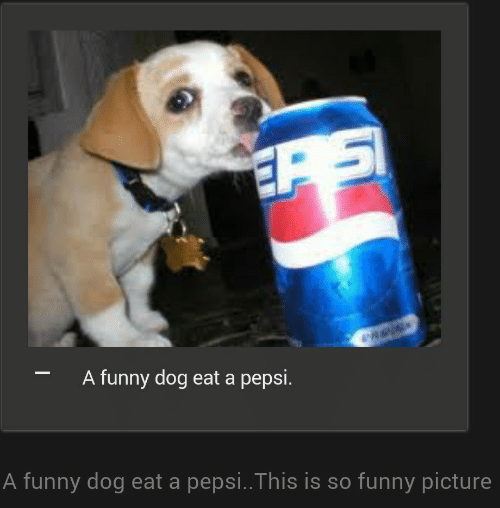 Pepsi: A funny dog eat a pepsi.  A funny dog eat a pepsi..This is so funny picture