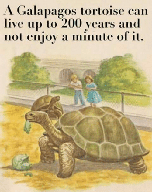 minute: A Galapagos tortoise can  live up to 200 years and  not enjoy a minute of it.