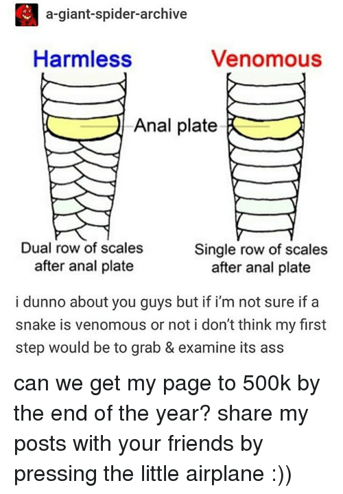 Ass, Friends, and Memes: a-giant-spider-archive  Harmless  Venomous  Anal plate  Dual row of scales  Single row of scales  after anal plate  after anal plate  i dunno about you guys but if i'm not sure if a  snake is venomous or not i don't think my first  step would be to grab & examine its ass can we get my page to 500k by the end of the year? share my posts with your friends by pressing the little airplane :))