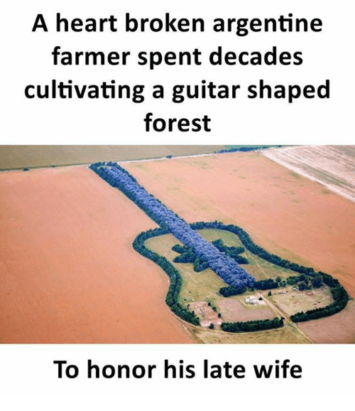 argentine: A heart broken argentine  farmer spent decades  cultivating a guitar shaped  forest  To honor his late wife
