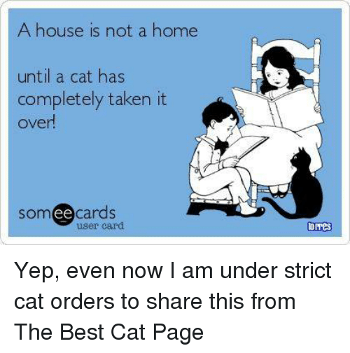 Ee Cards: A house is not a home  until a cat has  completely taken it  over  Som ee  cards  user card  Omes Yep, even now I am under strict cat orders to share this from The Best Cat Page