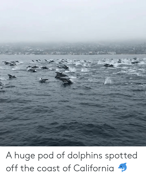 Dank, California, and Dolphins: A huge pod of dolphins spotted off the coast of California 🐬