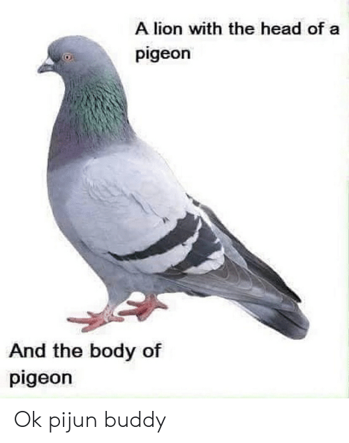 Head, Lion, and Pigeon: A lion with the head of a  pigeon  And the body of  pigeon Ok pijun buddy