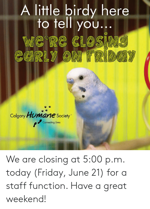 Friday, Memes, and Humane Society: A little birdy here  to tell you...  e Re CLOsieNG  CURLY ON TRIDGY  Calgary Humane Society  Connecting Lives We are closing at 5:00 p.m. today (Friday, June 21) for a staff function. Have a great weekend!