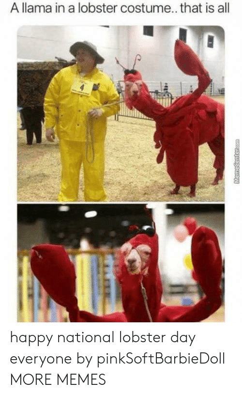 Dank, Memes, and Target: A llama in a lobster costume... that is all  MHR  MemeCentercom happy national lobster day everyone by pinkSoftBarbieDoll MORE MEMES
