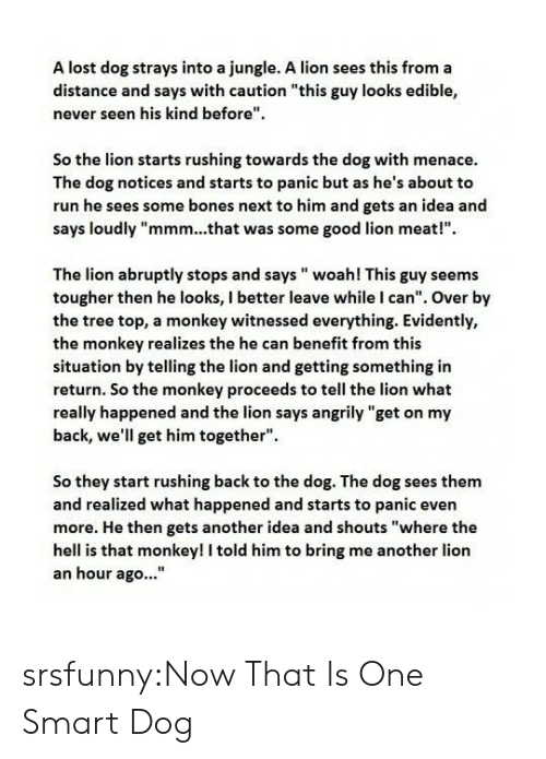 """Bones, Run, and Tumblr: A lost dog strays into a jungle. A lion sees this from a  distance and says with caution """"this guy looks edible,  never seen his kind before""""  So the lion starts rushing towards the dog with menace.  The dog notices and starts to panic but as he's about to  run he sees some bones next to him and gets an idea and  says loudly """"mmm...that was some good lion meat!""""  The lion abruptly stops and says woah! This guy seems  tougher then he looks, I better leave while I can"""". Over by  the tree top, a monkey witnessed everything. Evidently,  the monkey realizes the he can benefit from this  situation by telling the lion and getting something in  return. So the monkey proceeds to tell the lion what  really happened and the lion says angrily """"get on my  back, we'll get him together"""".  So they start rushing back to the dog. The dog sees them  and realized what happened and starts to panic even  more. He then gets another idea and shouts """"where the  hell is that monkey! I told him to bring me another lion  an hour ago..."""" srsfunny:Now That Is One Smart Dog"""