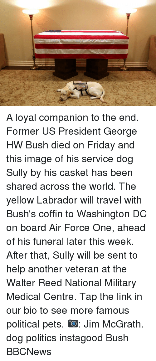 Friday, Memes, and Politics: A loyal companion to the end. Former US President George HW Bush died on Friday and this image of his service dog Sully by his casket has been shared across the world. The yellow Labrador will travel with Bush's coffin to Washington DC on board Air Force One, ahead of his funeral later this week. After that, Sully will be sent to help another veteran at the Walter Reed National Military Medical Centre. Tap the link in our bio to see more famous political pets. 📷: Jim McGrath. dog politics instagood Bush BBCNews